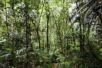 Trees and ferns in Daintree Rainforest, Australia