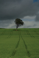 Lone Tree near West Kilbride, Ayrshire<br /> <br /> Copyright www.scottishhorizons.co.uk/Keith Fergus 2011 All Rights Reserved