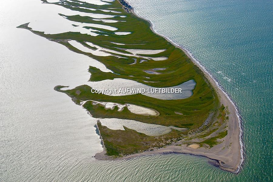 Graswarder: EUROPA, DEUTSCHLAND, SCHLESWIG- HOLSTEIN, 07.06.2013: Graswarder ist ein 230 Hektar großes Naturschutzgebiet in der Naehe von Heiligenhafen. Hier brueten zahlreiche Vogelarten, wie beispielsweise Graugaense (Anser anser), Brandgaense (Tadorna tadorna) und Austernfischer (Haematopus ostralegus). Des Weiteren gibt es viele Strand- und Salzpflanzen, wie etwa Stranddistel (Eryngium maritimum) und Meerkohl (Crambe maritima).