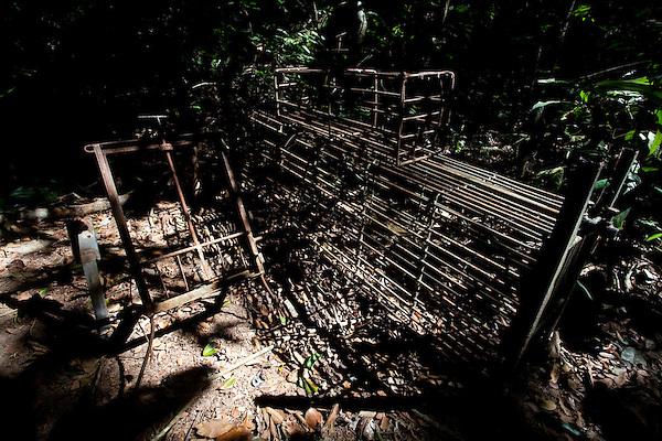 Linhares_ES, Brasil...Reserva Natural da CVRD em Linhares, Espirito Santo...The CRVD Natural Reserve in Linhares, Espirito Santo...Foto: LEO DRUMOND / NITRO