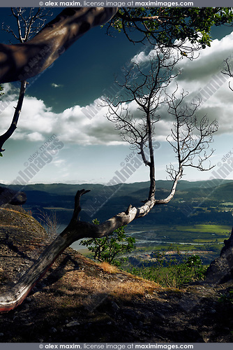 Dry branch of Pacific Madrone, Arbutus Tree over North Cowichan Valley aerial nature scenery. North Cowichan, Vancouver Island, British Columbia, Canada