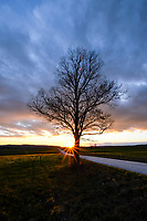 Stick season maple tree silhouette at sunset in Sudbury, Vermont.
