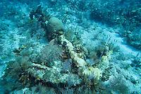 Spanish Anchor, Florida Keys