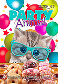 Samantha, ANIMALS, REALISTISCHE TIERE, ANIMALES REALISTICOS, funny photos, photos+++++,AUKP85,#a#, EVERYDAY ,party