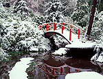 Kubota Gardens, Seattle, WA      <br /> Arched red footbridge with pond reflections in winter snow