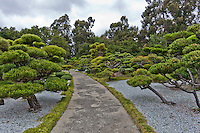 Sculpted trees line the path through the Japanese Gardens in Hayward, Califonria.