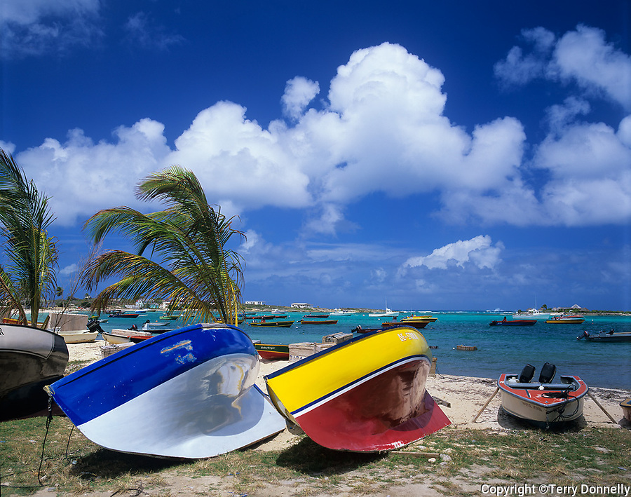 Anguilla, BWI<br /> Palms and coloful beached sailboats on the shoreline of Island Harbor, Caribbean Sea