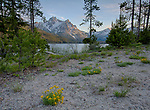 Idaho, South Central, Stanley, SNRA. Wildflowers blooming on the shore of Stanley Lake with Mt. McGown in the evening light, part of the Sawtooth Range of Mountains.