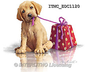 Marcello, REALISTIC ANIMALS, REALISTISCHE TIERE, ANIMALES REALISTICOS, paintings+++++,ITMCEDC1120,#A# ,dogs,puppies