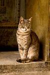 Street cat pauses in doorway in Istanbul, Turkey