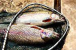 Fishing - Trout, Salmon