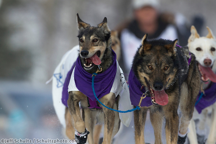 Ceremonial start of the Iditarod sled dog race Anchorage Saturday, March 2, 2013. ..Photo (C) Jeff Schultz/IditarodPhotos.com  Do not reproduce without permission