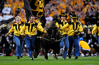 31 Aug 2008: Colorado mascot Ralphie the buffalo is led accross the field by handlers prior to a game against Colorado State. The Colorado Buffaloes defeated the Colorado State Rams 38-17 at Invesco Field at Mile High in Denver, Colorado. FOR EDITORIAL USE ONLY