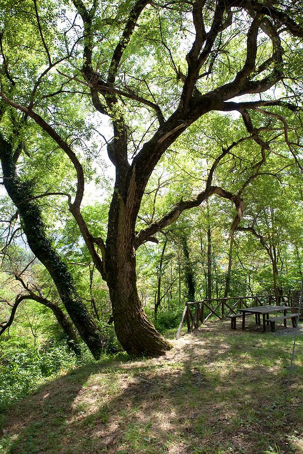 Parco Pollino, a national park in Basilicata, Italy, Europe