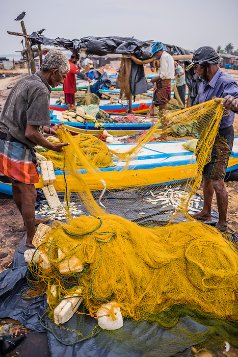 Negombo fish market lellama fish market photo of for Williams fish market