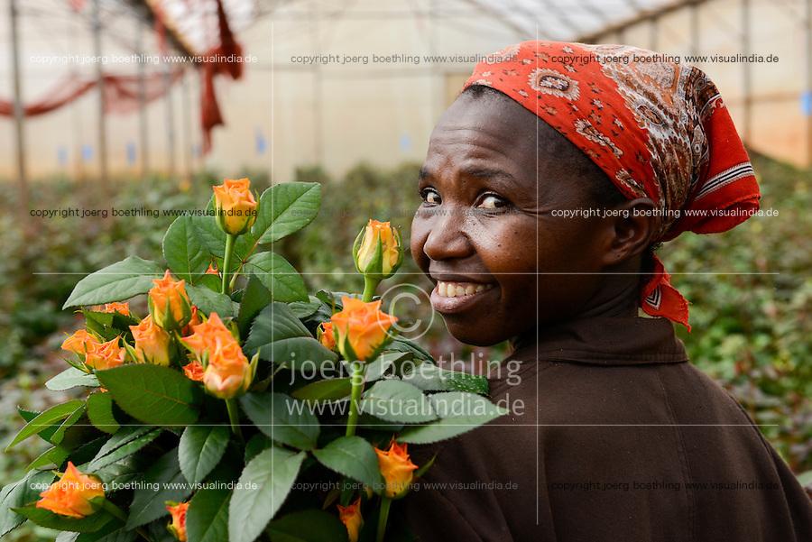 KENYA Thika near Nairobi, Simbi Roses is a fair trade rose flower farm which produces rose as cutting flowers for export to europe, worker Judy Muthoni / KENIA Thika bei Nairobi, Simbi Roses ist eine fairtrade zertifizierte Blumenfarm die Rosen fuer den Export nach Europa anbauen, Plueckerin Judy Muthoni