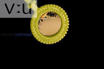 Soap Bubble Film/Reflected Light