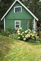 Garden hydrangeas, pretty green garden shed with white trim, lawn, summer