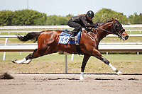 #133Fasig-Tipton Florida Sale,Under Tack Show. Palm Meadows Florida 03-23-2012 Arron Haggart/Eclipse Sportswire.