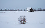 Montana, western, Flathead Valley, Kalispell. An old abandoned, leaning, cabin in a snowy landscape.
