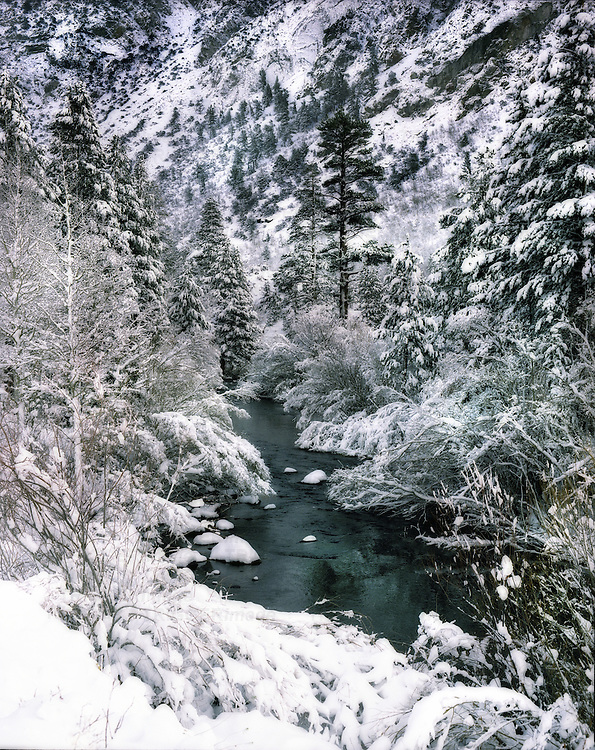 Snow on fir trees and beside a river