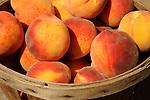 Crops- Fruit