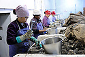 Workers shuck oysters at P&J Oysters where the owners are worried about the FDA's proposal to process raw oysters, New Orleans, Monday, Oct. 26, 2009.Louisiana Seafood..