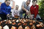 """Foto: VidiPhoto<br /> <br /> VOORHOUT – Met behulp van bollenkweker Klaas Hogervorst uit Noordwijkerhout, planten kinderen van groep 4/5 van de Antoniusschool maandag tussen de herfstbuien door hyacinten, narcissen, tulpen en crocussen rond het schoolplein. Eerder dit jaar won de basisschool duizend bloembollen, de publieksprijs van de zogenoemde """"Soil Your Undies""""-challenge van de Koninklijke Algemeene Vereeniging voor Bloembollencultuur (KAVB). Daarbij werden in heel Nederland onderbroeken  ingegraven om de gezondheid van de tuingrond te testen. De hyacintenbollen zijn afkomstig van Hogervorst. Hij was de winnaar van de """"Soil Your Undies""""-vakprijs en heeft de beste bollengrond van Nederland. De bloembollen bloeien al in februari en bieden dan voedsel aan (wilde) bijen."""
