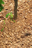A close up of the sandy clay and pebble soil at Chateau Trotanoy   Pomerol  Bordeaux Gironde Aquitaine France