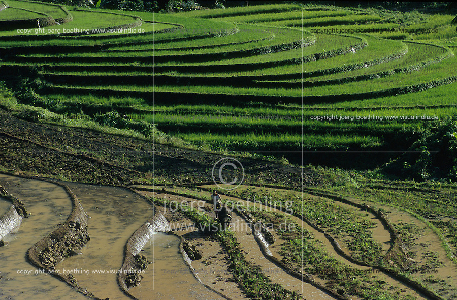 PHILIPPINES, Negros, organic farming, farmer ploughs paddy terrace field with water buffalo in village Sitio Tabidiao / PHILIPPINEN, Negros, biologischer Reisanbau, Bauer pfluegt Reisfelder in Terrassen mit Wasserbueffel