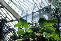 Parco Phoenix. Phoenix Park. .È un imponente parco e giardino botanico alla periferia di Nizza..Diamant Vert è una delle serre più grandi d' Europa. Ricrea simultaneamente sette diversi climi tropicali che permettono lo sviluppo delle specie più rare..It is a big park and botanical garden on the outskirts of Nice. .Diamant Vert is one of the largest greenhouses of Europe. Recreate simultaneously seven different tropical climates that allow the development of the rarest species....