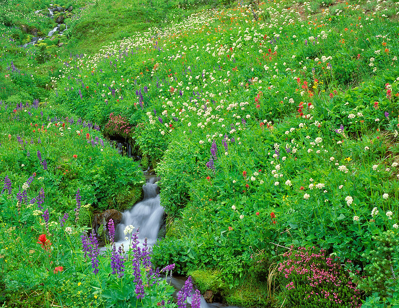 Wildflowers and stream. Bird Creek Meadows. Washington