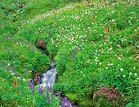 Wildflowers and stream. Bird Creek Meadows. Washington