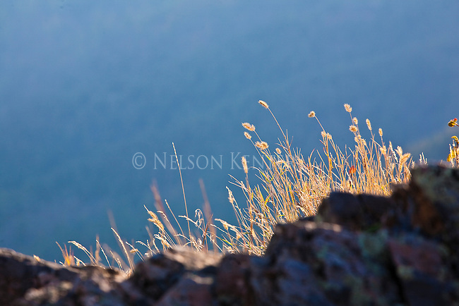 Grass is lit by the rising sun on a hill above Missoula, Montana