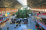 Tropical rainforest plants growing in garden inside Atocha railway station, Madrid , Spain