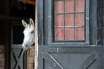 White Horse looks around barn door,