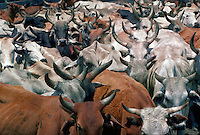 Detail of heads and horns in a cattle pen, Kissimmee, Florida