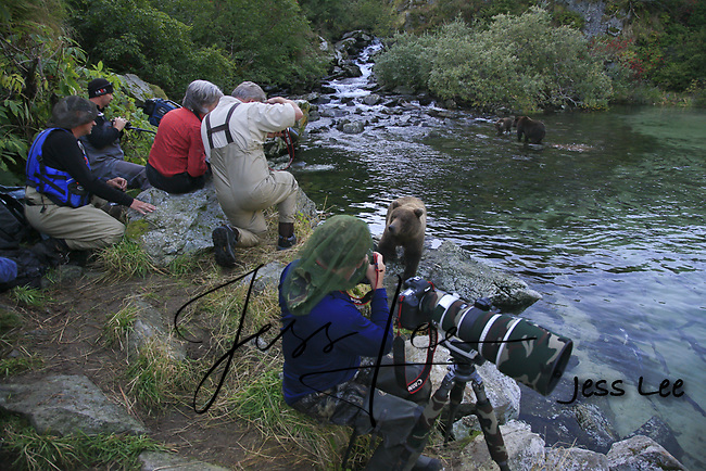 A photo of a group photographers photographing a grizzly bear in Alaska. Grizzly Bear or brown bear alaska Alaska Brown bears also known as Costal Grizzlies or grizzly bears