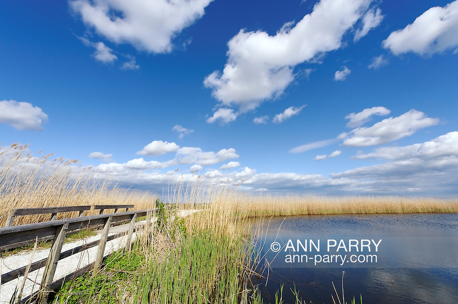 Marshland Pond surrounded by tall reeds and marsh grass, with footbridge at side, early spring, wide angle view in Levy Park and Preserve in Merrick, south shore of Long Island, New York.
