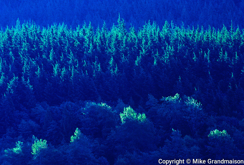 Forest on mountainside of Alouette Lake<br /> Golden Ears Provincial Park<br /> British Columbia<br /> Canada