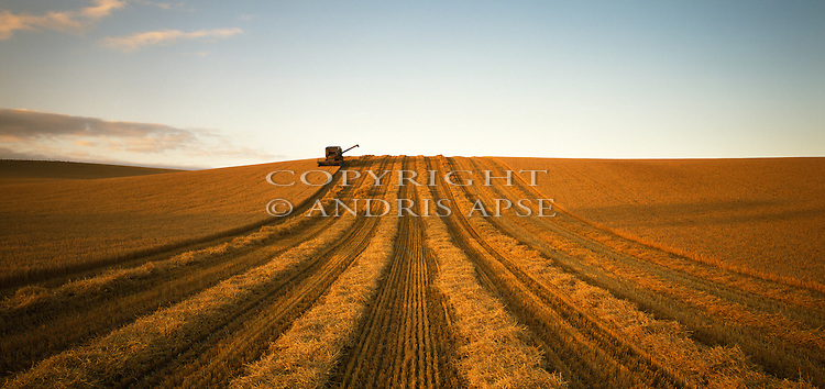 Harvesting barley field near Temuka, Canterbury. New Zealand.