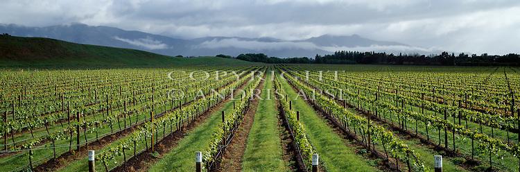 Vineyards at Brancott Estate. Marlborough Region. New Zealand.