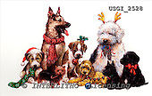GIORDANO, CHRISTMAS ANIMALS, WEIHNACHTEN TIERE, NAVIDAD ANIMALES, paintings+++++,USGI2528,#XA# dogs,puppies