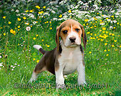 Marek, ANIMALS, REALISTISCHE TIERE, ANIMALES REALISTICOS, dogs, photos+++++,PLMP2767,#a#, EVERYDAY