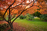 Sunset through the branches of a tree at the University of Idaho Arboretum in Moscow in autumn.