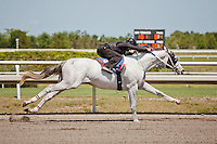 #101.Fasig-Tipton Florida Sale,Under Tack Show. Palm Meadows Florida 03-23-2012 Arron Haggart/Eclipse Sportswire.