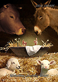 CHIARA,CHRISTMAS ANIMALS, WEIHNACHTEN TIERE, NAVIDAD ANIMALES, paintings+++++,USLGCHI496,#XA# ,funny ,funny