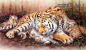 Kayomi, REALISTIC ANIMALS, paintings, tiger, TigerFamily_M, USKH158,#A# realistische Tiere, realista, illustrations, pinturas