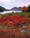 Acadia National Park, ME<br /> Fall colored blueberries bushes near Jordon Pond with the Bubbles in the distance