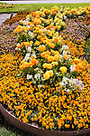DISPLAY OF PANSY, SNAPDRAGON, RANUNCULUS BY SAKATA SEEDS
